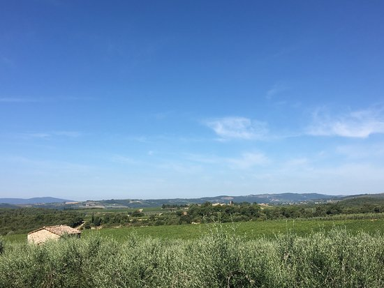 Villa di Sotto: View of olive groves from restaurant