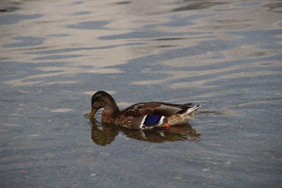 Calceranica al Lago, Włochy: fauna