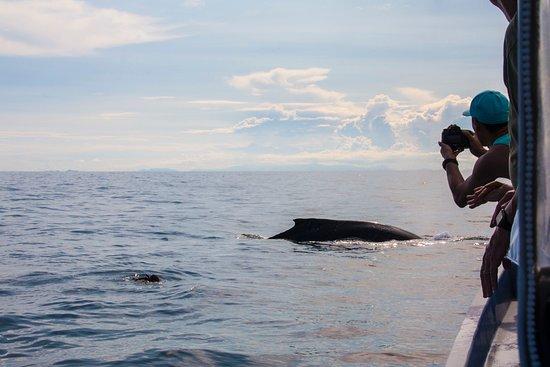 Whale Watching Panama: Ann en el agua intentando ayudar a una ballena