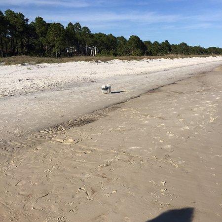Carrabelle Beach, an RVC Outdoor Destination: Pet friendly beach