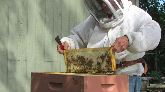 The Gathering Place: Vic giving us a lesson on the beekeeping