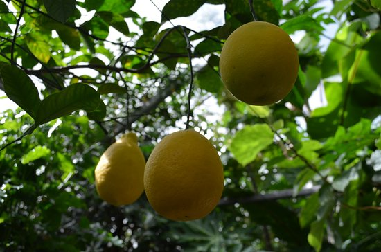 Limonariy