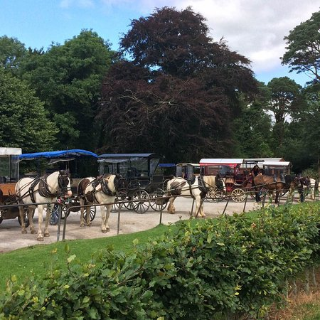 Muckross House, Gardens & Traditional Farms: Jaunting Carts