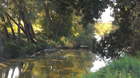 Riserva naturale orientata Parma Morta