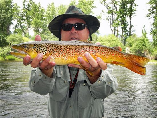 Divide, MT: Big Brown Trout