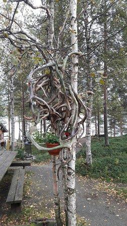 Svanvik, Norge: Fantastisk sted ☺