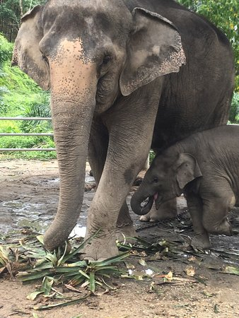 Amazing memories - Picture of Phang Nga Elephant Park ...