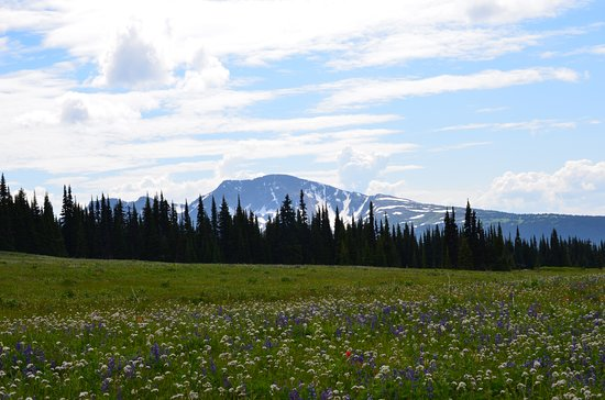 Discover Wells Gray: View from Trophy Mountain