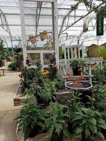 วูดสต็อก, เวอร์จิเนีย: Such a creative display for the echinaceas!