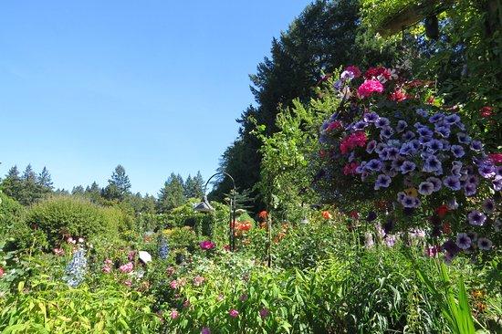 Butchart Gardens: Jardin botanique de classe mondiale.