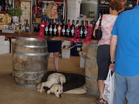 Elgin, AZ: Friendly owners pouring wine while dog supervises;-)