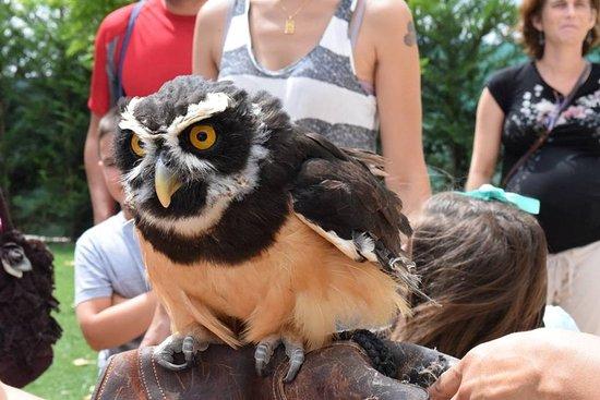 Águila calva: fotografía de Tierra Rapaz, Calahorra - TripAdvisor