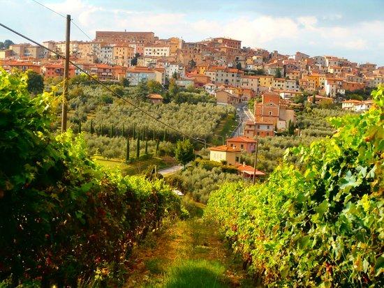 Agriturismo La Pietriccia: P8210002_large.jpg