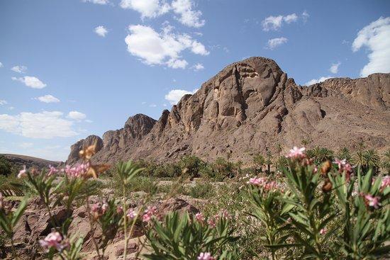 Auberge La Terrasse des Delices : dry River Oasis Fint