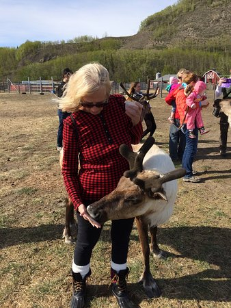 Reindeer Farm: photo0.jpg