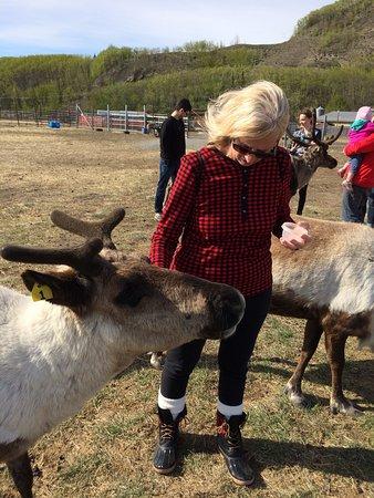 Reindeer Farm: photo1.jpg