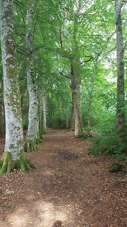 انفرموريستون, UK: Hiking near our room
