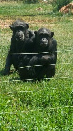 Spata, Hellas: Attica Zoological Park