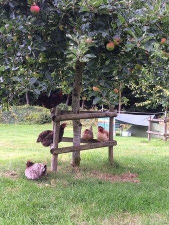 Priory Mill Farm Campsite: photo1.jpg