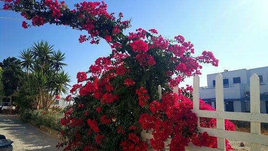 Schinoussa, Grecja: 20160828_195036_large.jpg