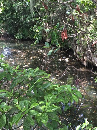 North Miami, FL: A lot of trash in in canal