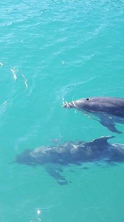 Tutukaka, Selandia Baru: 20160828_142353_002_large.jpg