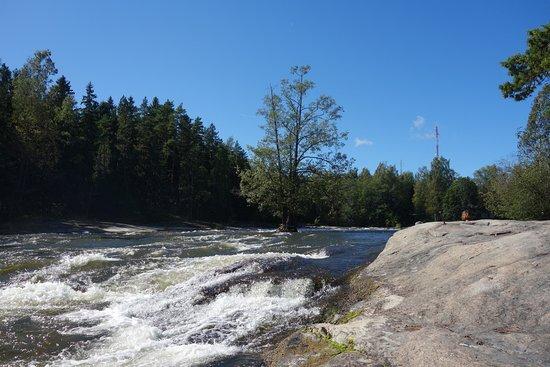 Kotka, Finlande : Дерево, выросшее на бурной реке