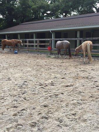 North Miami, FL: Horse stable