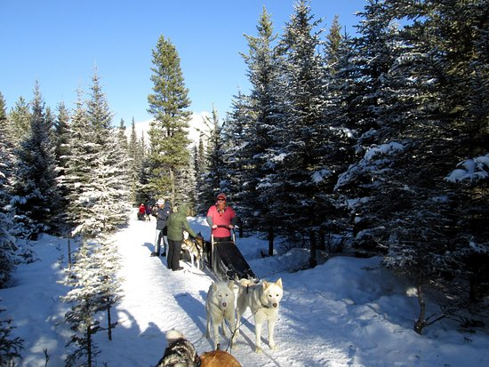 Snowy Owl Sled Dog Tours: Breaking for lunch