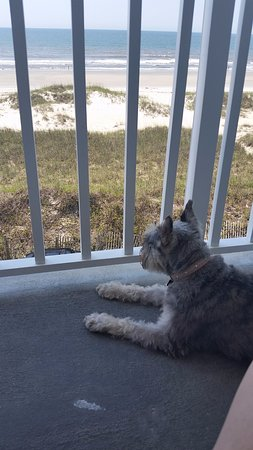 Islander Inn: Dog enjoying the spacious balcony.