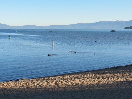 Lake Tahoe Vacation Resort: Walked the beach at 7am, very quiet just ducks and seagulls