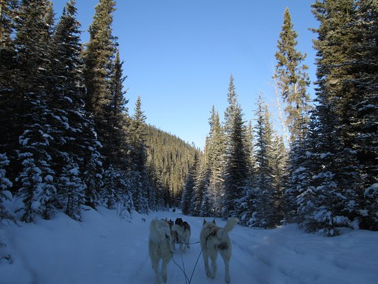 Snowy Owl Sled Dog Tours: near the start, picking up speed!