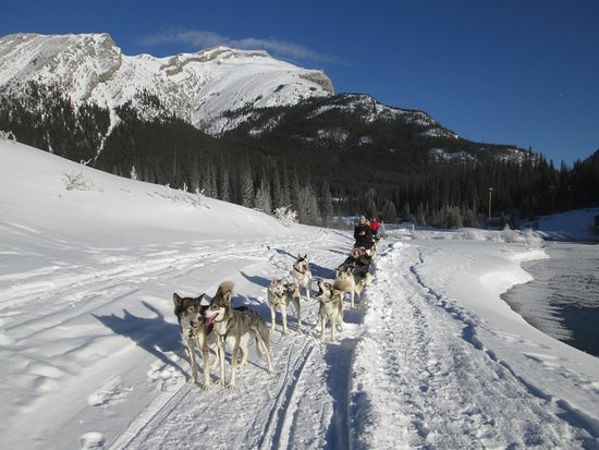 Snowy Owl Sled Dog Tours: A break in the run while we awaited the rest of our group