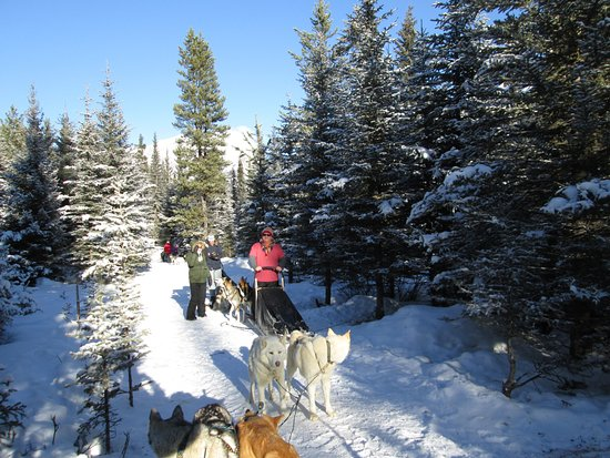 Snowy Owl Sled Dog Tours: Another break in the run