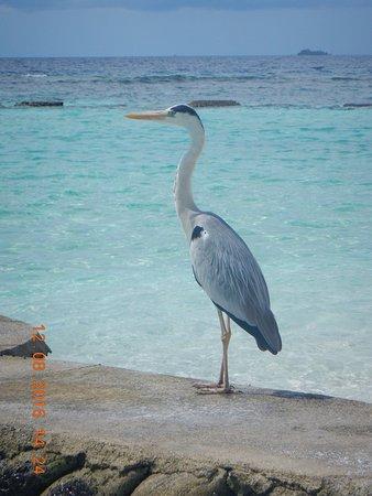 Nord Ari Atoll: photo5.jpg