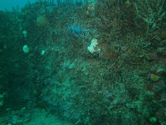 Spiegel Grove: upper deck railing encrusted with soft corals