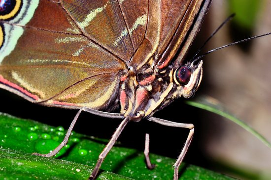 Branson, MO: Butterfly