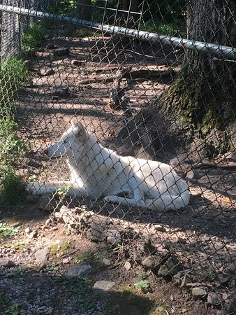 Lakota Wolf Preserve: photo0.jpg
