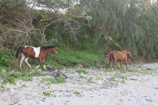 Beach Cocomo: photo4.jpg