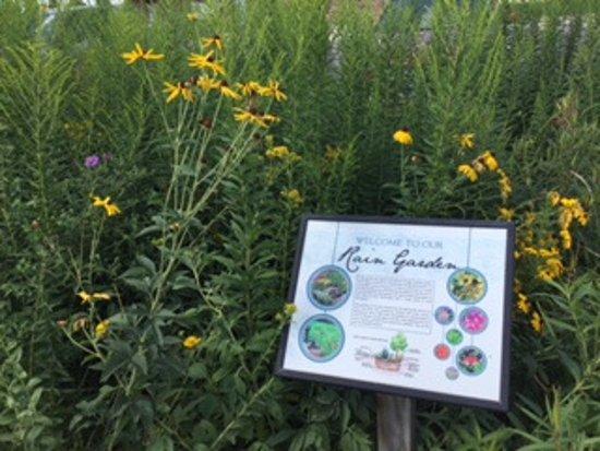 Blue Earth, MN: Giant Museum's adjacent Rain Garden featuring Minnesota's native beauties.
