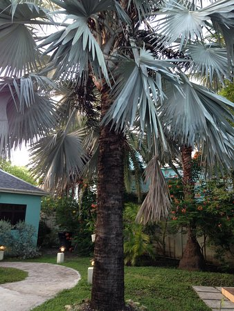 Buccaneer Beach Club: lots of different types of trees and plants