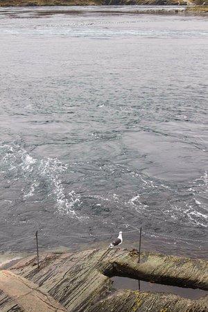 Bodo, Noruega: Desde el puente