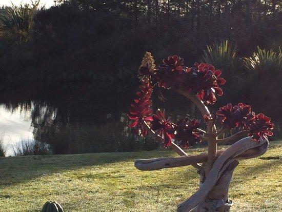 Westport, Nueva Zelanda: Pond at Bird Ferry Lodge