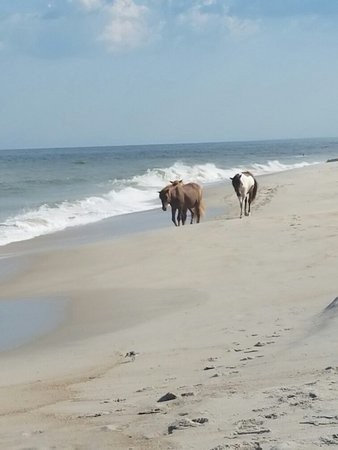 Assateague State Park Camping: 20160826_162345_large.jpg