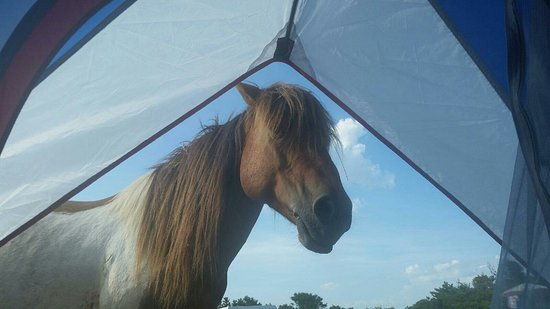 Assateague State Park Camping: 547_large.jpg