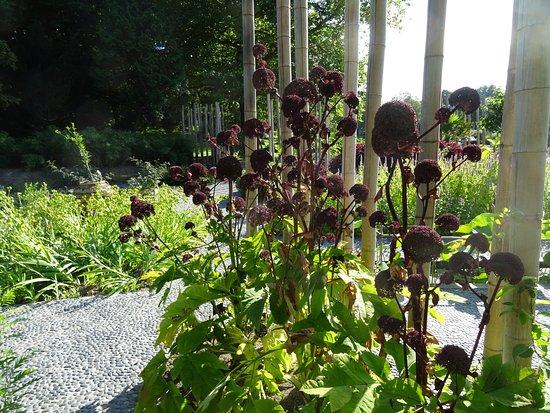 Botanische Tuin Leiden : Hortus botanicus leiden bild von botanical gardens hortus
