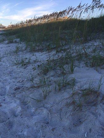 Jacksonville Beach, FL: photo7.jpg