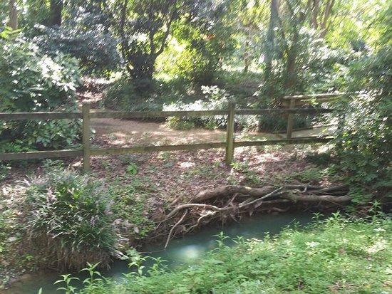 Mynelle Gardens: 20160827_151336_large.jpg