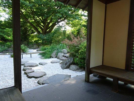 Botanische Tuin Leiden : Japanse tuin hortus botanicus leiden foto van botanical gardens