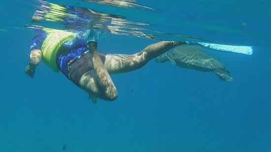 Po Olenalena Beach Snorkeling With Turtle